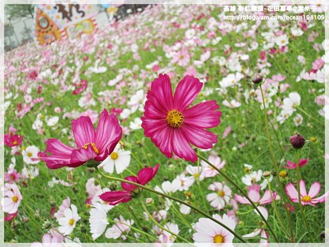 花海(紫)3.JPG