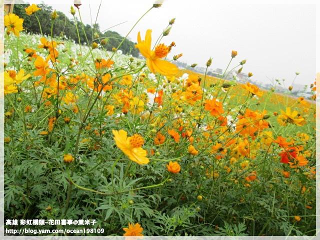 花海(黃)1.JPG