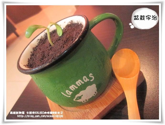 盆栽宇治1.JPG