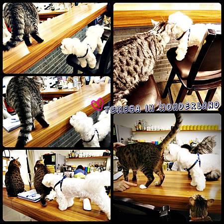 cats8.jpg