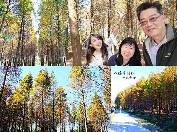 桃園旅遊-桃園八德落羽松森林