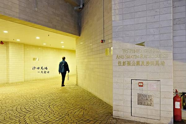 香港旅遊-香港沙田馬場賽馬
