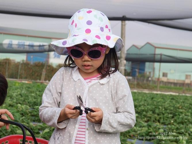 anna 4y 農村樂。彩莓趣。P3180139-003