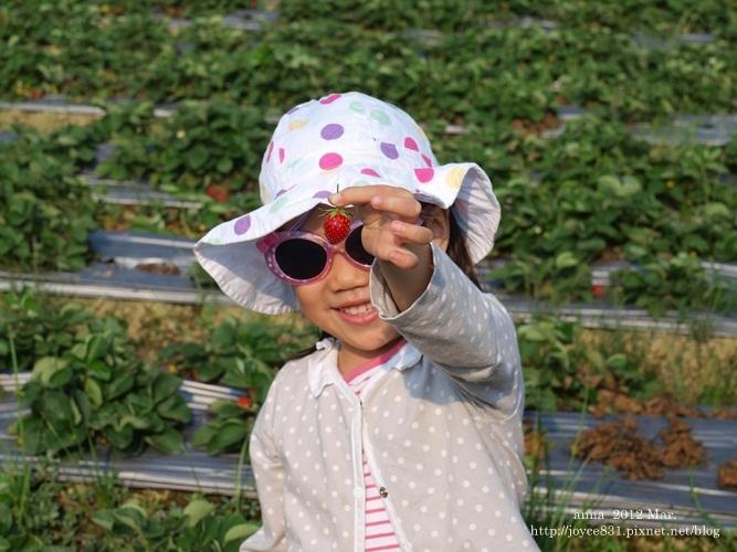 anna 4y 農村樂。彩莓趣。P3180148-004