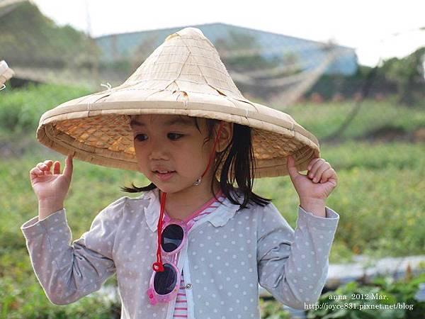 anna 4y 農村樂。彩莓趣。P3180173-006