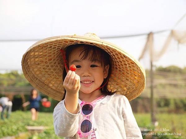anna 4y 農村樂。彩莓趣。P3180190-008