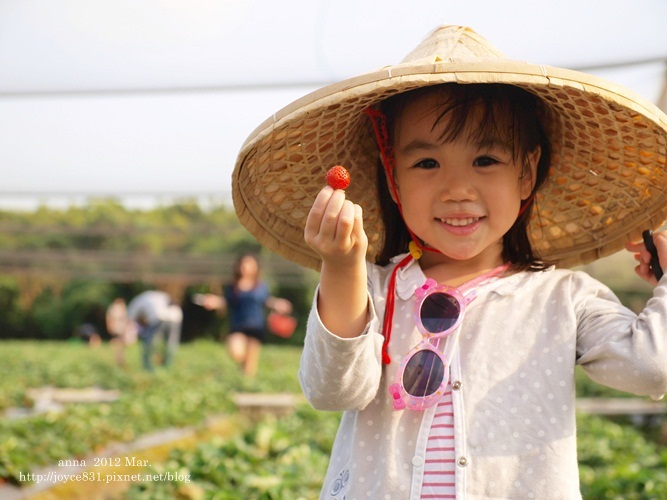anna 4y 農村樂。彩莓趣。P3180191-009