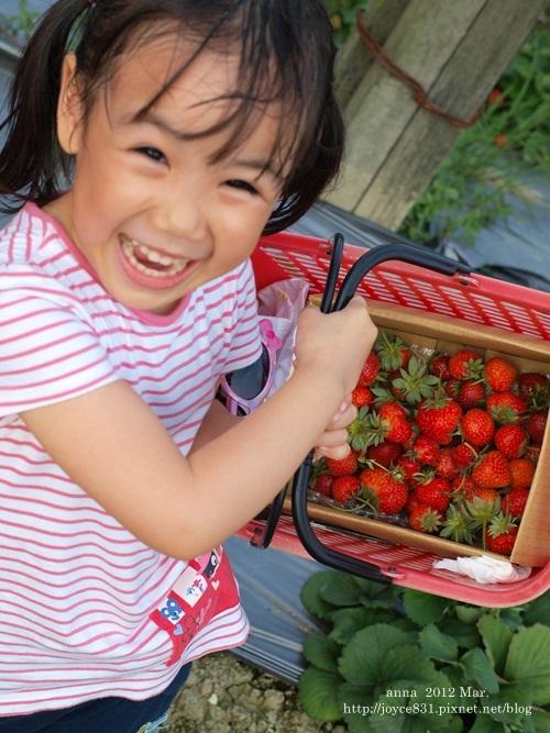 anna 4y 農村樂。彩莓趣。P3180202-014
