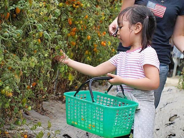 anna 4y 農村樂。彩莓趣。P3180219-015