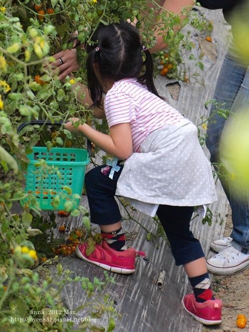 anna 4y 農村樂。彩莓趣。P3180223-016