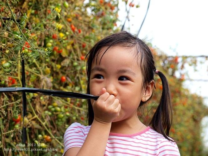 anna 4y 農村樂。彩莓趣。P3180260-018