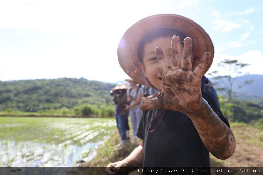 撫摸土壤的同時,幫稻田除草,觸感讓小朋友直呼好好玩!