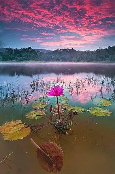 beautiful-lotus-morning-view-Favim.com-1212577-1
