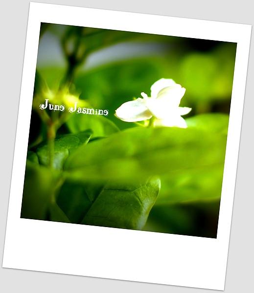 2010.7.30-June Jasmine.jpg