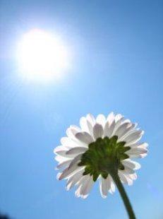 daisy_green_blue_242467_l