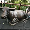 台灣水牛塑像