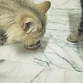 美國Lion-雞肉85g_180806_0014.jpg