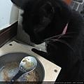 KOHA無穀主食罐-96%火雞肉_180827_0001.jpg