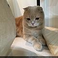 心僕生食雞丁_181116_0003.jpg