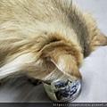 德國TUNDRA-羊+鹿_190507_0026.jpg