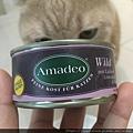 Amadeo阿瑪德-放牧鹿_190509_0052.jpg