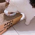汪喵-老貓銀養主食罐-鮭魚雞肉_190515_0003.jpg