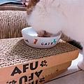 汪喵-老貓銀養主食罐-鮭魚雞肉_190515_0001.jpg