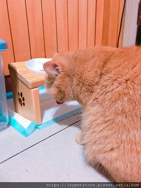 汪喵-老貓銀養主食罐-鮭魚雞肉_190515_0006.jpg