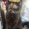 波菲特貓罐-鹿肉+雞肉170g_190526_0002.jpg