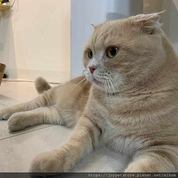 里奧納多貓罐-海鮮_190924_0009.jpg
