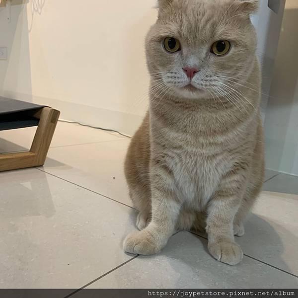 里奧納多貓罐-海鮮_190924_0011.jpg