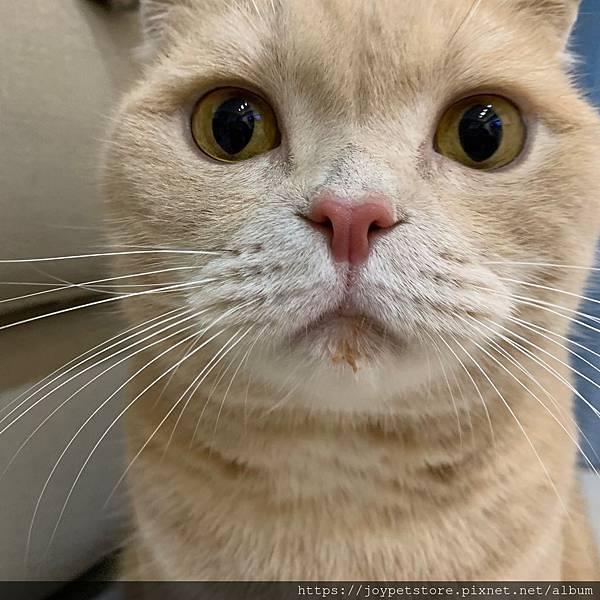 里奧納多貓罐-海鮮_190924_0036.jpg