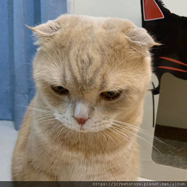 里奧納多貓罐-海鮮_190924_0046.jpg