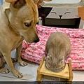 樂透腎臟保健餐盒羊肉_191015_0016.jpg