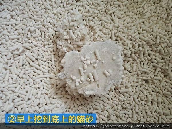 美喵人生豌豆砂-搖滾薔薇9L_191117_0019.jpg