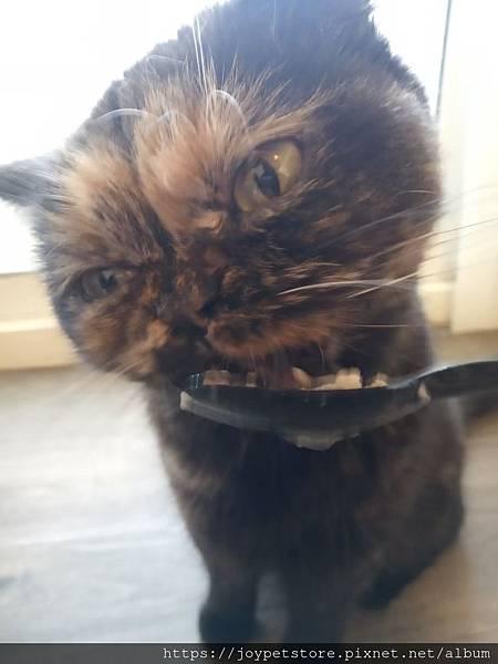 麥卡登貓餐盒-自由放養火雞佐MSC阿拉斯加鮭魚100g_191117_0016.jpg