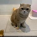 心靈雞湯細切鮭魚_191124_0014.jpg