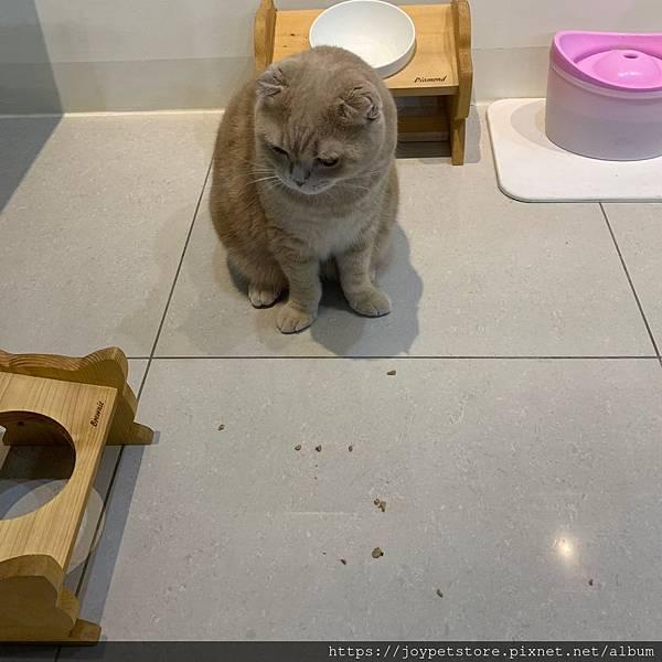 心靈雞湯細切鮭魚_191124_0017.jpg