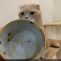 心靈雞湯細切鮭魚_191124_0019.jpg