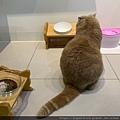 心靈雞湯細切鮭魚_191124_0027.jpg