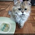 貓咪午茶時刻-鯖魚排_191203_0006.jpg