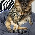 貓咪午茶時刻-鯖魚排_191203_0003.jpg