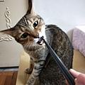 貓咪午茶時刻-鯖魚排_191203_0016.jpg