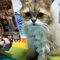 貓咪午茶時刻-鯖魚排_191203_0023.jpg
