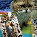 貓咪午茶時刻-鯖魚排_191203_0024.jpg