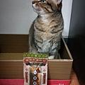 貓咪午茶時刻-鯖魚排_191203_0026.jpg