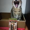 貓咪午茶時刻-鯖魚排_191203_0027.jpg