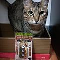 貓咪午茶時刻-鯖魚排_191203_0028.jpg