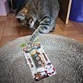 貓咪午茶時刻-鯖魚排_191203_0029.jpg