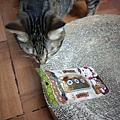 貓咪午茶時刻-鯖魚排_191203_0031.jpg
